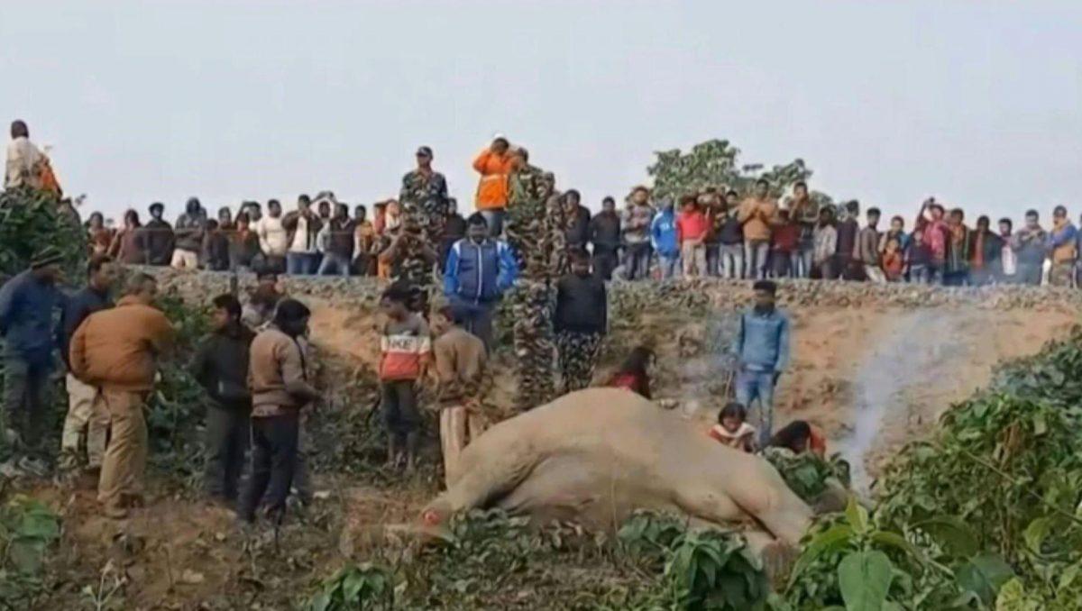 VIDEO | Dos elefantes fueron atropellados por un tren en la India