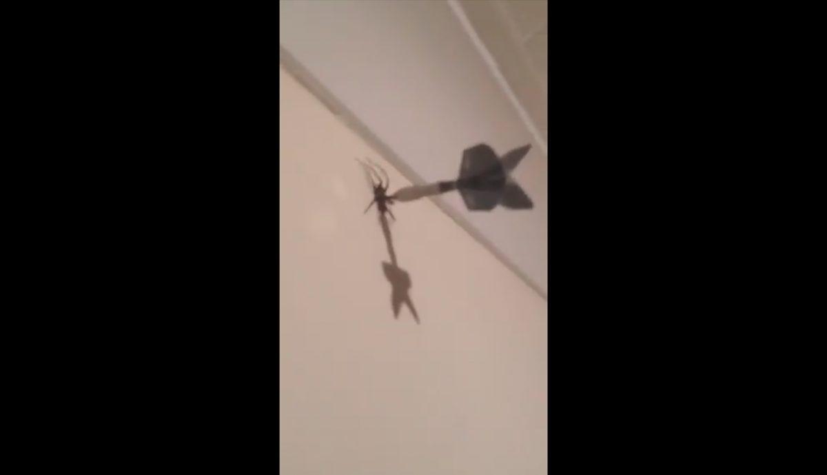 VIDEO   Mata a una araña con un dardo y lo acusan de maltrato animal