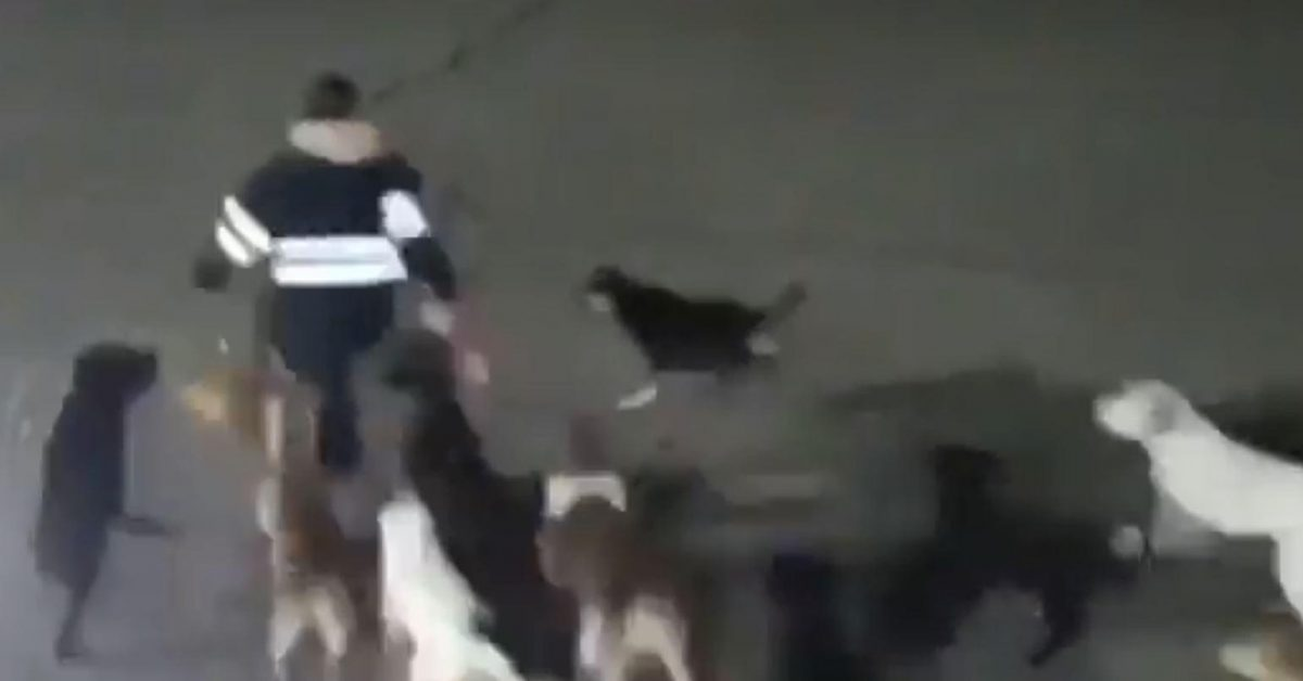 VIDEO: jauría de perros ataca y mata a una mujer en México