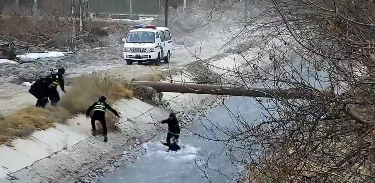 VIDEO: policía forma una escalera humana para rescatar a un niño arrastrado por un río