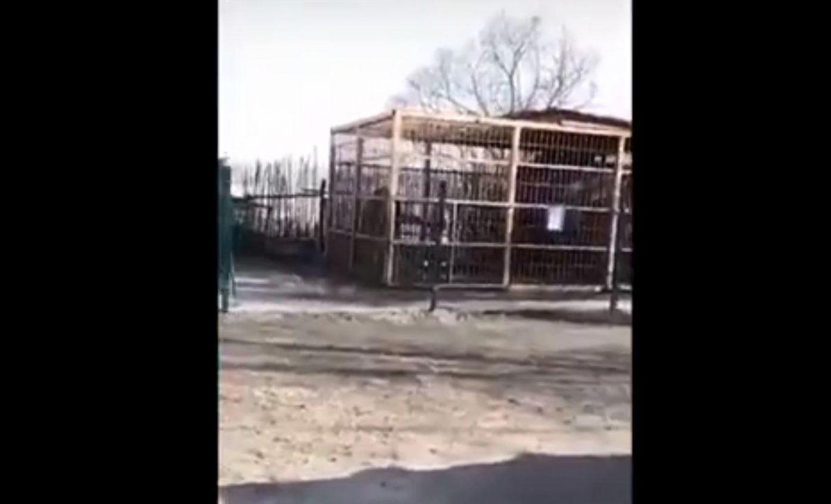 IMÁGENES SENSIBLES: oso ataca a mujer que trataba de  alimentarlo