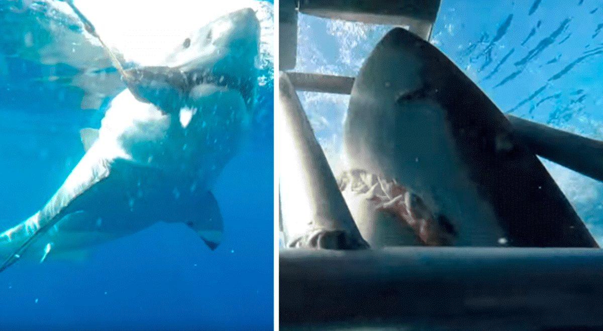 VIDEO   Un fotógrafo se salva de que un enorme tiburón blanco lo ataque en la cara