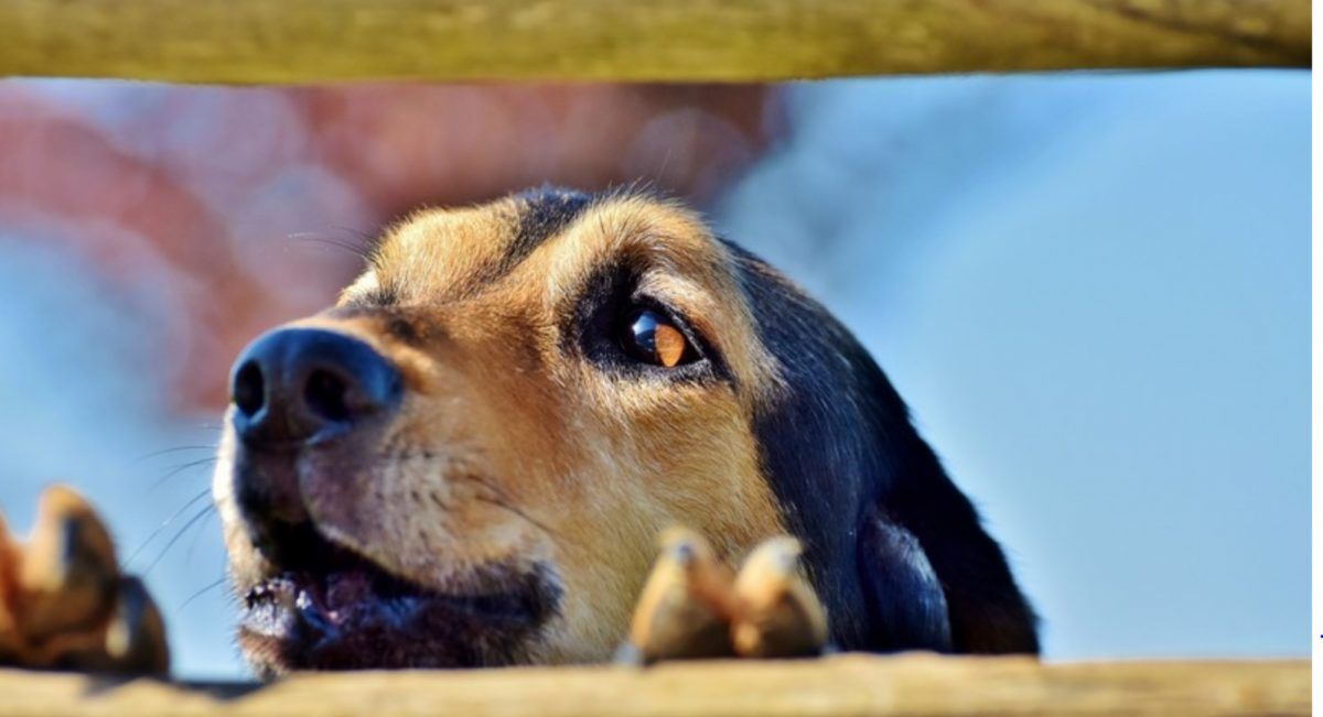 Un perro 'colabora' con delincuentes para robar una cervecería