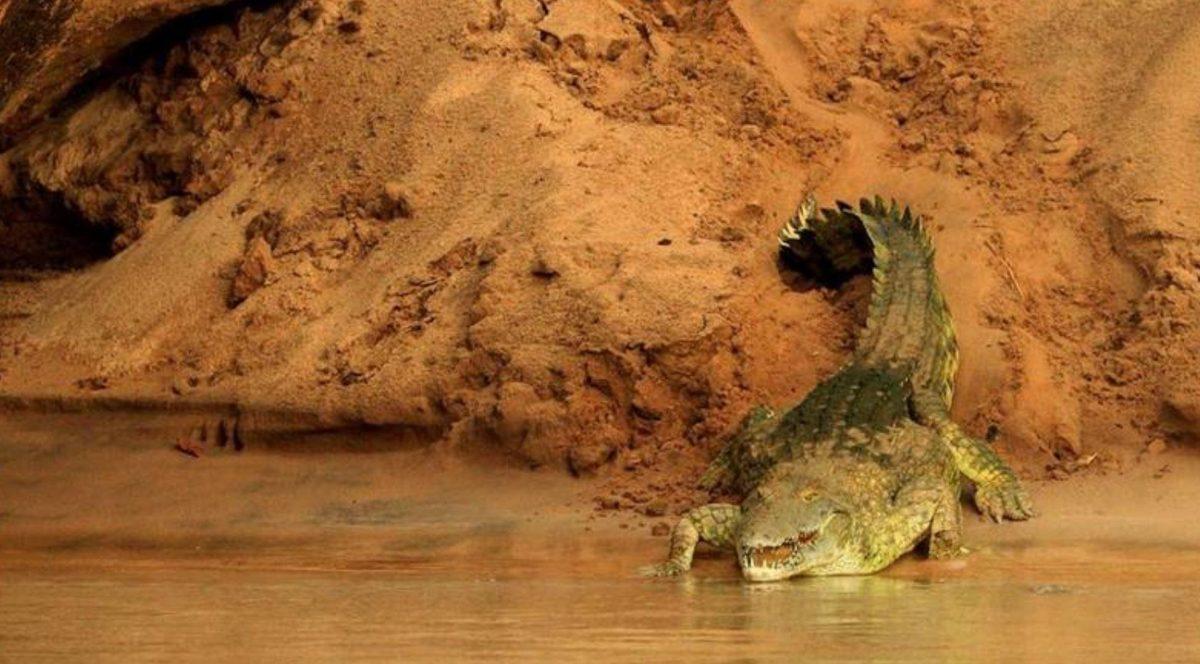 Niña de 11 años salta sobre un cocodrilo y le arranca los ojos para salvar a su amiga
