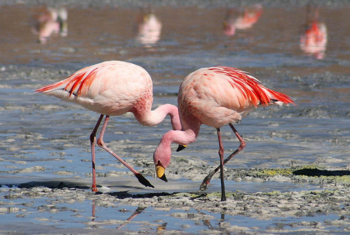 Flamingo tuvo que ser sacrificado después de que un niño le arrojara una piedra