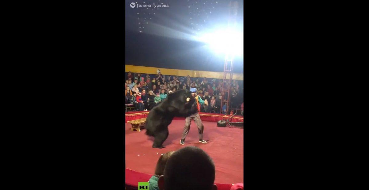 VIDEO | Impactante ataque de un oso a su domador en plena función de un circo