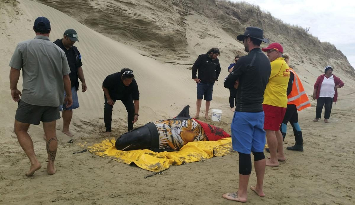 Rescatan a seis ballenas varadas en Nueva Zelanda