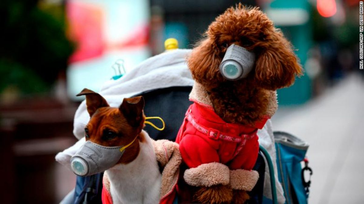 Muere el perro que habría dado positivo por coronavirus