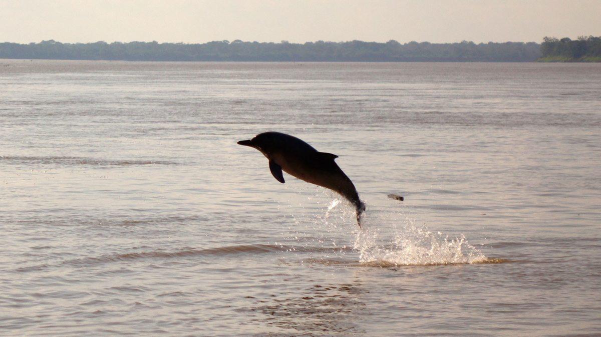 Delfín lleva regalos a los humanos a cambio de comida tras el levantamiento de la cuarentena en Australia (FOTOS)