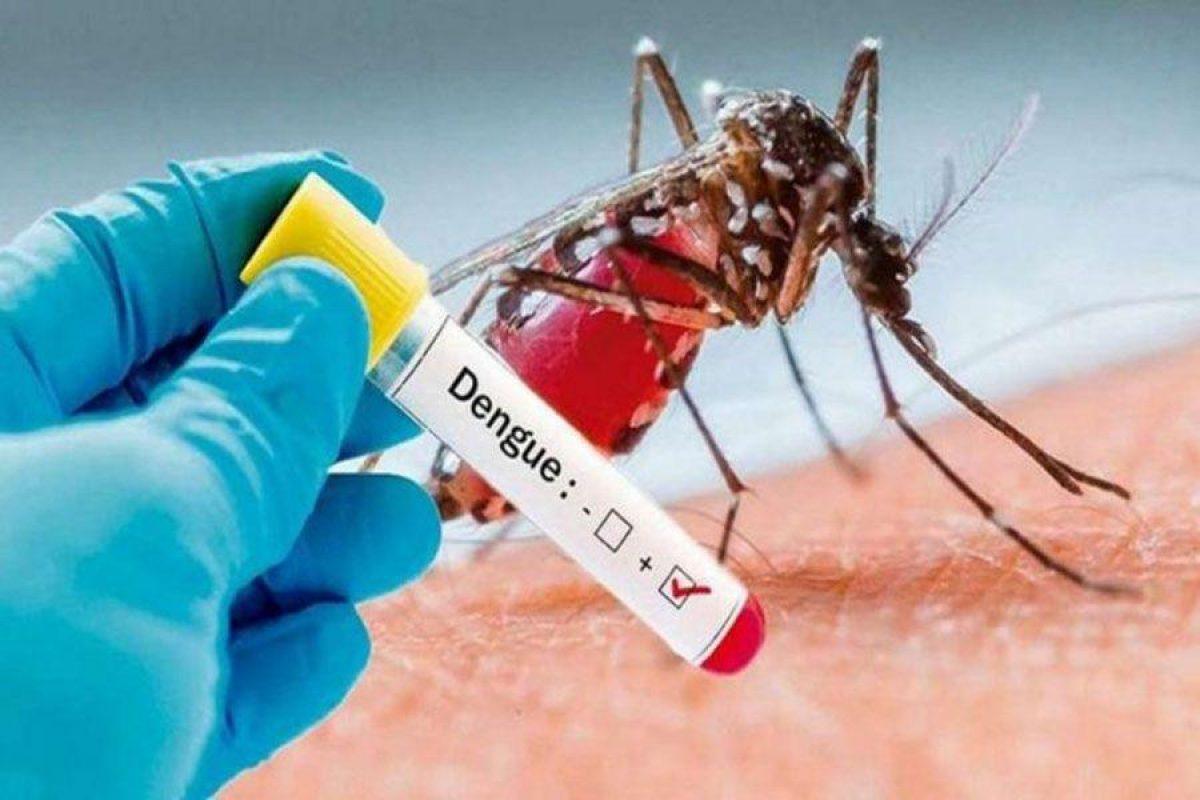 ¡Paraguay en alerta!: Más de 15 muertos por dengue en la última semana