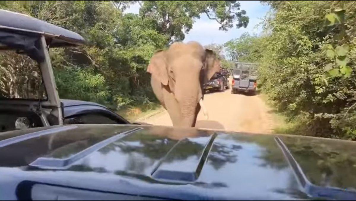 VIDEO | Un elefante sorprende a turistas: buscaba comida dentro del carro