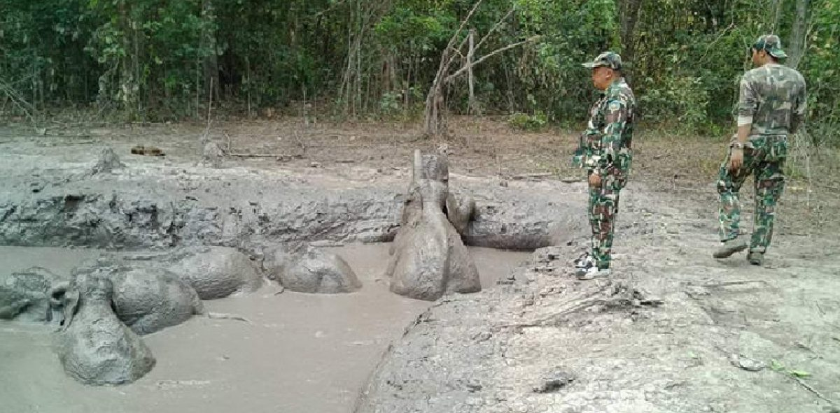 Seis elefantes bebés fueron rescatados luego de caer en un agujero de barro