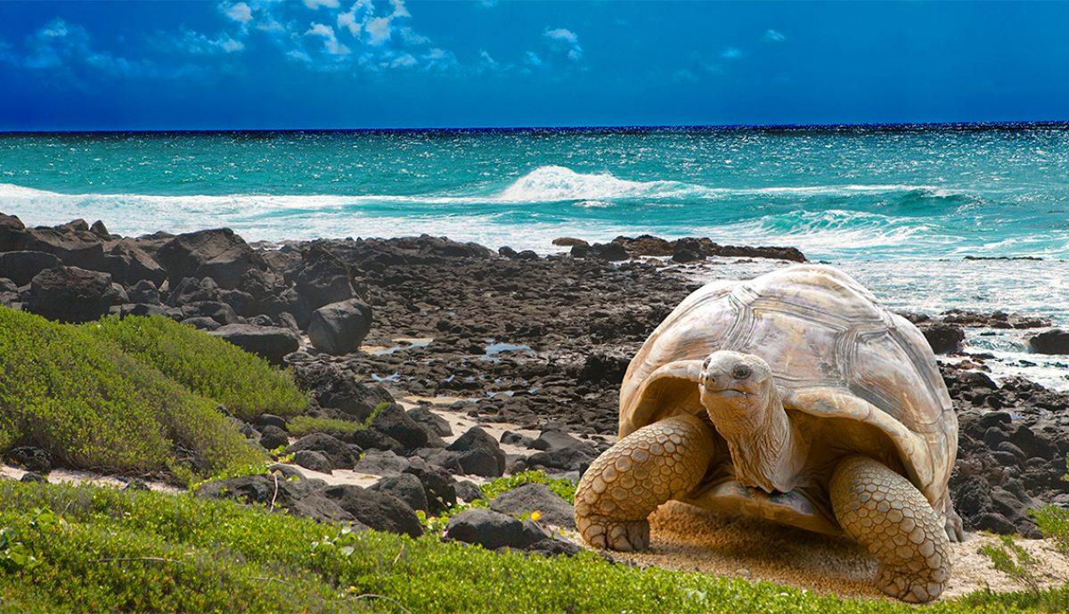 Google dedica su doodle a las Islas Galápagos