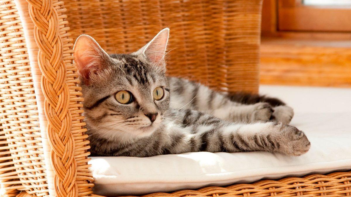 VIDEO   Un gato tranquiliza a un niño que sufre una crisis nerviosa de una forma muy particular