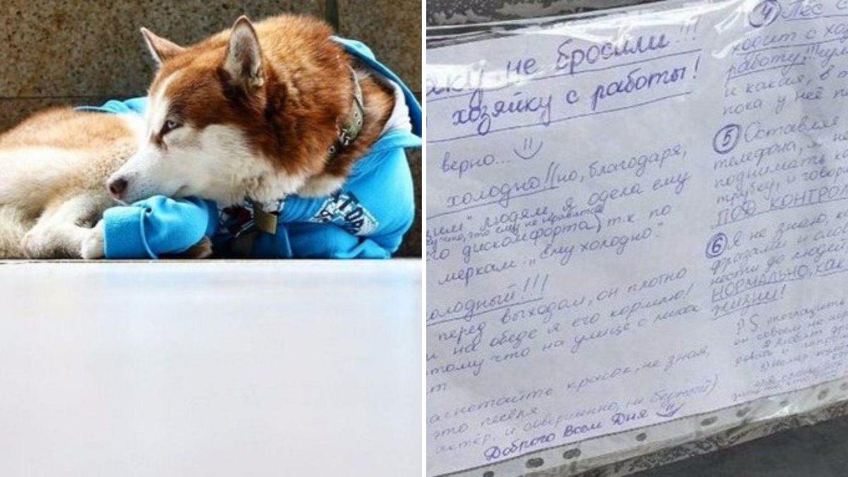 Otro 'Hachiko': un perro espera cada día 8 horas a su dueña en la puerta de su trabajo