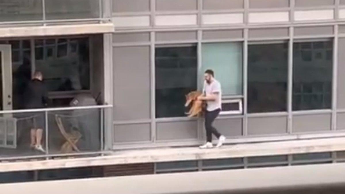 Hombre arriesga su vida al caminar por la cornisa de su edificio para rescatar a su gato