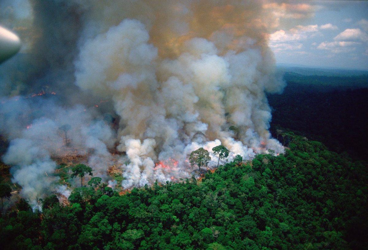 Di Dicaprio, Ricky Martin, Luisito Comunica, entre personalidades piden por incendio en la Amazonía