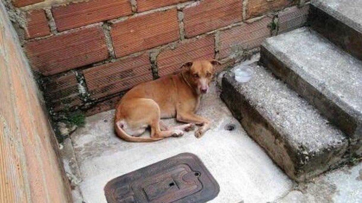 Rescatan a perro víctima de actos sexuales
