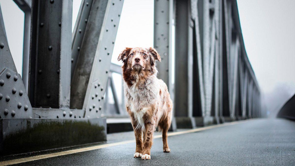 Un perro espera durante cuatro días a su dueño en el puente en que este se suicidó