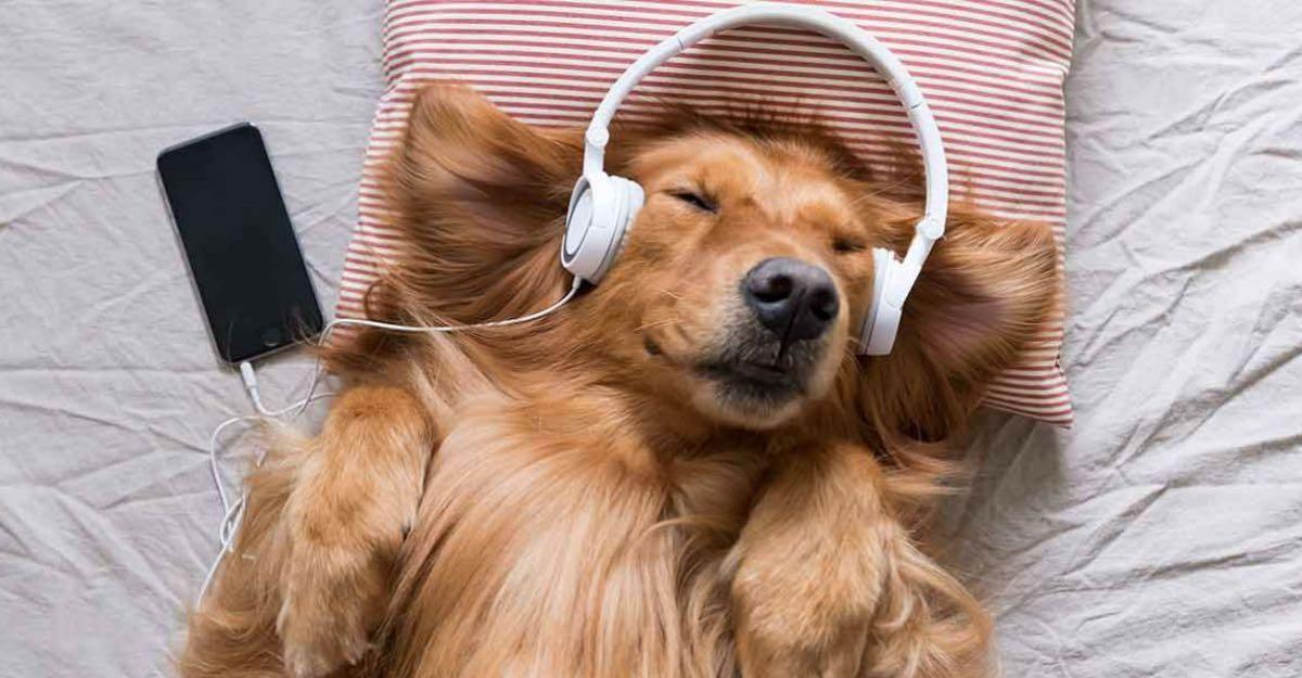 ¿Spotify para mascotas? Hasta la iguana tiene una lista de canciones