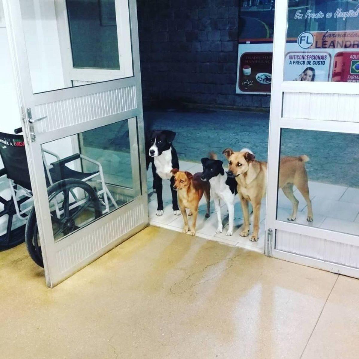 IMÁGENES: perros esperaron durante horas a que su dueño salga de la sala de urgencias