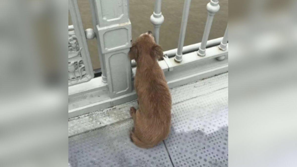 Un perro espera por días a su dueño en el puente en que este se quitó la vida