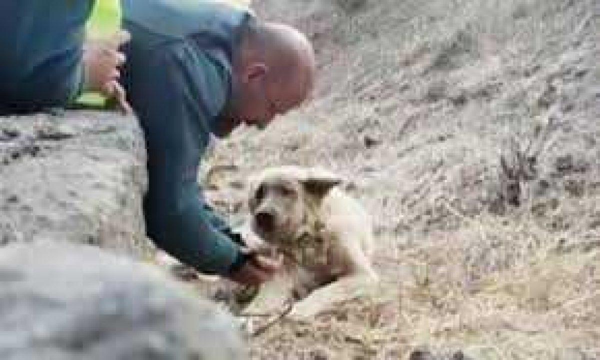 El conmovedor momento del rescate de un perro en el incendio de Gran Canaria