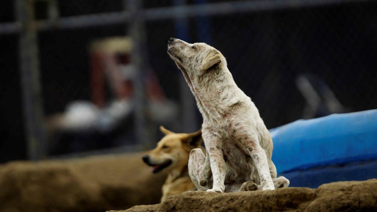 México: Una jauría de perros ataca y mata a una mujer