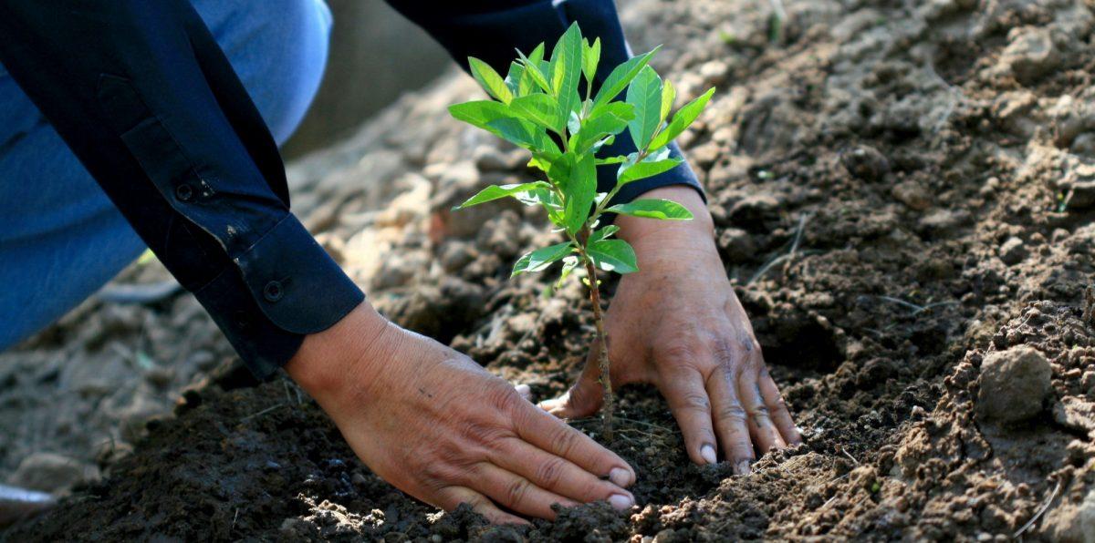 Habría que reforestar un área del tamaño de Estados Unidos para salvar el planeta
