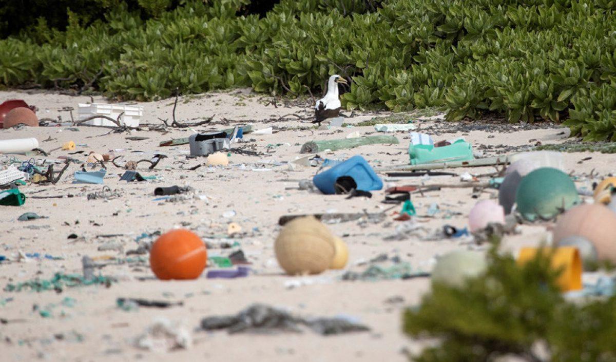 Hallan 18 toneladas de residuos en una paradisíaca isla del Pacífico