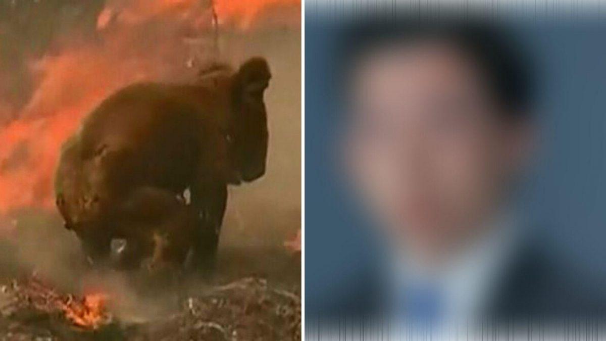 Estrella de televisión propone vender la piel de los koalas muertos en los incendios de Australia