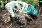 El hambre amenaza a los animales de zoos en Indonesia