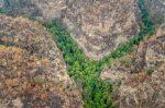 FOTOS | Así protegieron a los 'Árboles dinosaurios' de los incendios en Australia