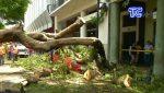 VIDEO | Árbol cae sobre un vehículo en pleno centro de Guayaquil