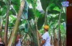 VIDEO: Productos ecuatorianos ingresarán a Europa libre de aranceles