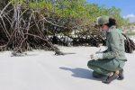 Estudio permitirá comparar el comportamiento de 34 zonas turísticas en las áreas protegidas de Galápagos con y sin visitantes