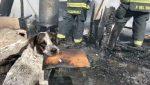 VIDEO | Un perro llora desconsolado luego de que un incendio destruyera su hogar