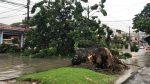 VIDEO | Se registra caída de un árbol al norte de Guayaquil