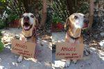 La historia del perrito que vendía golosinas para pagar su quimioterapia