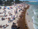 VIDEO | El sargazo, la plaga que amenaza la belleza del Caribe mexicano