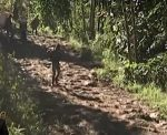 Más cadáveres son hallados en mineras ilegales