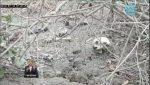 VIDEO   Un cráneo y otros huesos encontrados cerca de una carretera en Manta