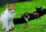 VIDEO | ¿Te gustan los gatos? Este es el lugar perfecto para ti