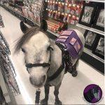 VIDEO   ¿Un caballo viajando en la cabina del avión? Los pasajeros se sorprendieron