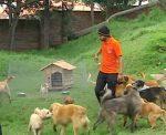 Reformas al COIP buscan endurecimiento de penas ante violencia contra animales
