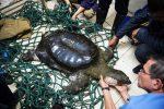 Muere la última tortuga hembra de caparazón blando en China