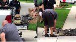 VIDEO | Cocodrilo indefenso noqueó a su capturador y se vuelve viral