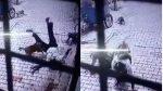 VIDEO | Monos atacan sin motivos a un hombre y lo arrojan al suelo