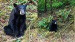FOTOS | Sacrifican a oso por acostumbrarse al contacto humano