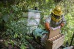 VIDEO: pesticidas de cocales ponen en peligro a las abejas en Bolivia